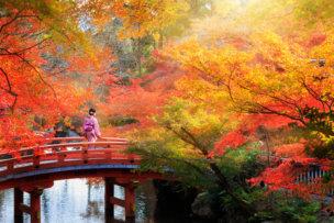 57375035 - wooden bridge in the autumn park, japan