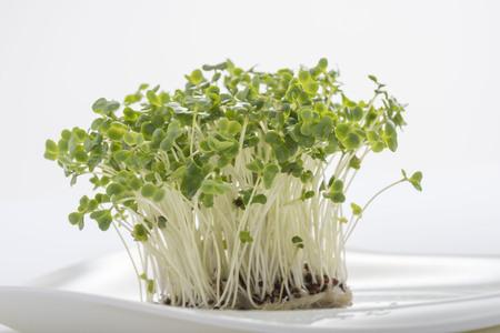 酵素がカラダに必要不可欠なのは なぜか?