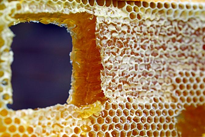 マヌカの蜂蜜、レンゲのハチミツ、アカシアの蜂蜜など、その使う目的と選び方は